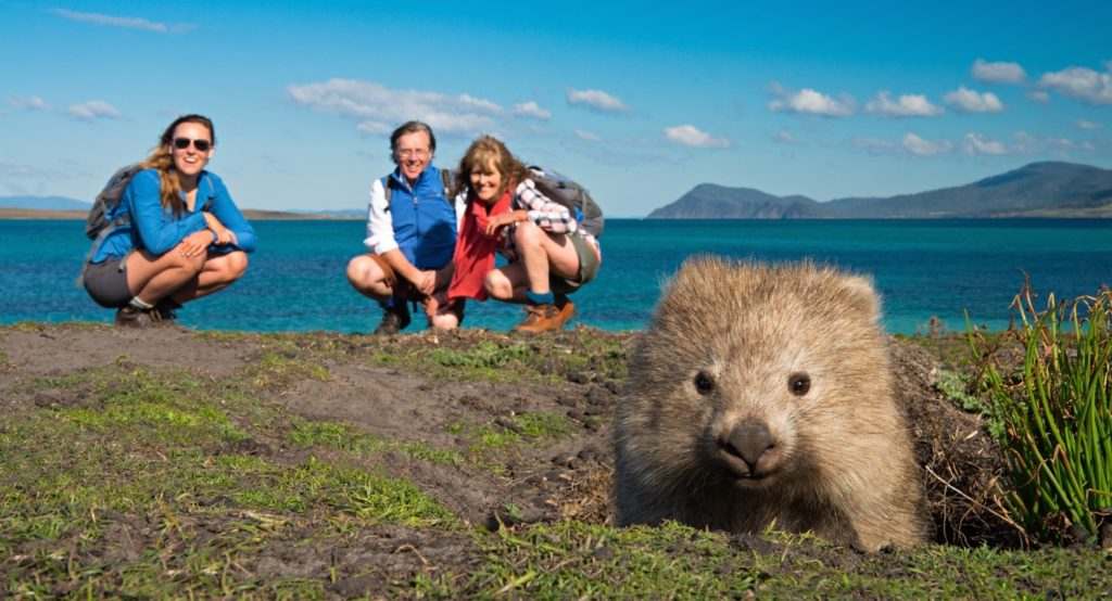Wombat, Maria Island, Tasmania