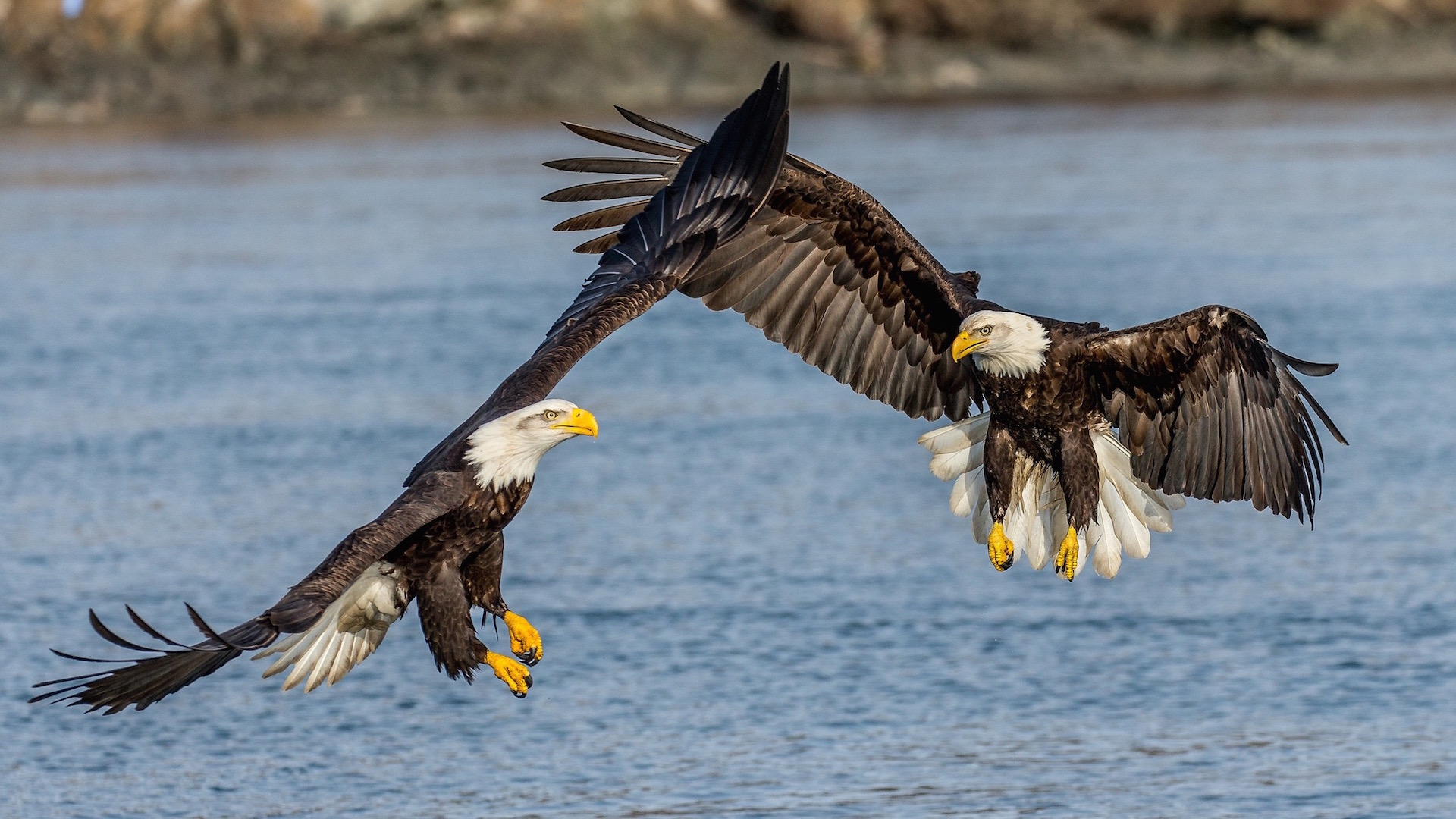 Bald Eagles, Alaska